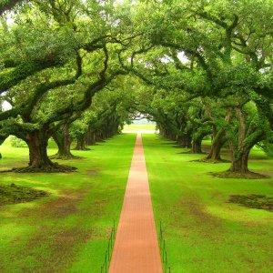 Wallpaper Green Trees