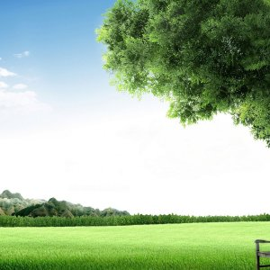 Tree Bench wallpaper